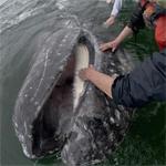 freiendly_whale150X150