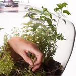 greenhouse_lamp150X150