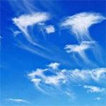jellyfish_cloud150X150