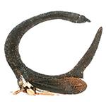 treehopper150X150