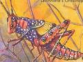 Leichhardt's_Grasshopper150X150