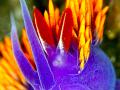 shawl_nudibranch150X150