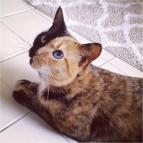 chimera_cat04