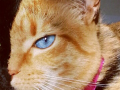 chimera_cat150X150
