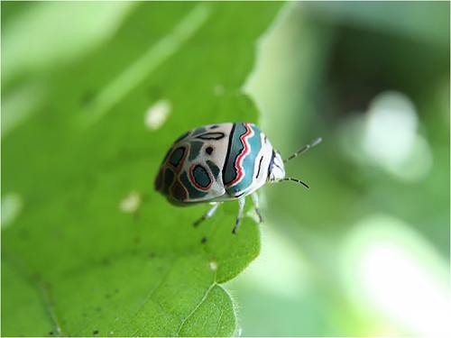 picasso_bug01
